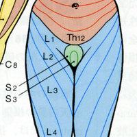 Derumatome
