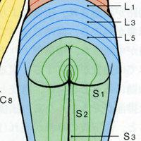 Derumatome2