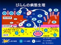 Poster20091111mochida40