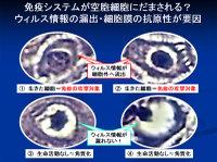 Poster20091111mochida71