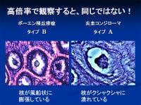 Poster20091111mochida80