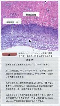 Histologycellbio582p