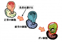 Cell6