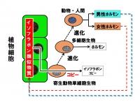 Isofurabon1